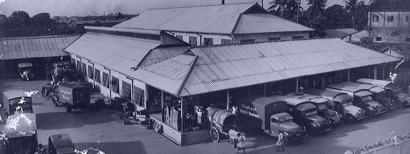 Elephant House History