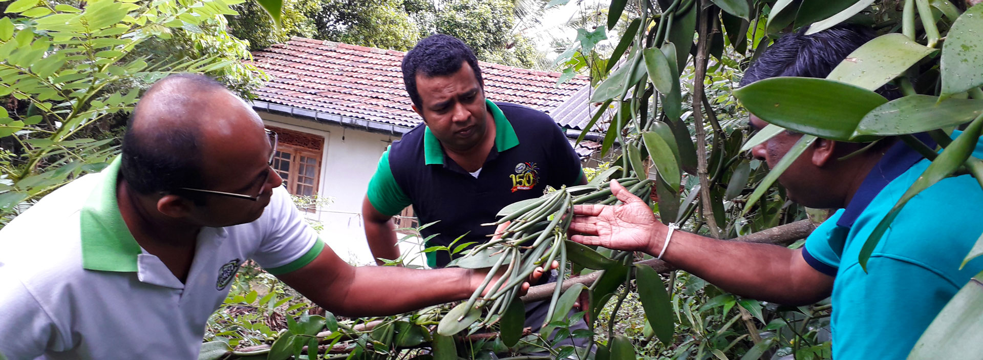 Providing technical assistance to Sri Lankan vanilla farmers